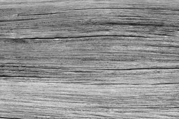 dry tree texture