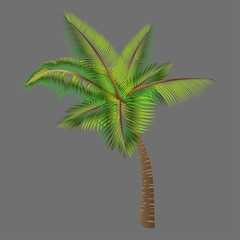 Vector trees palm.