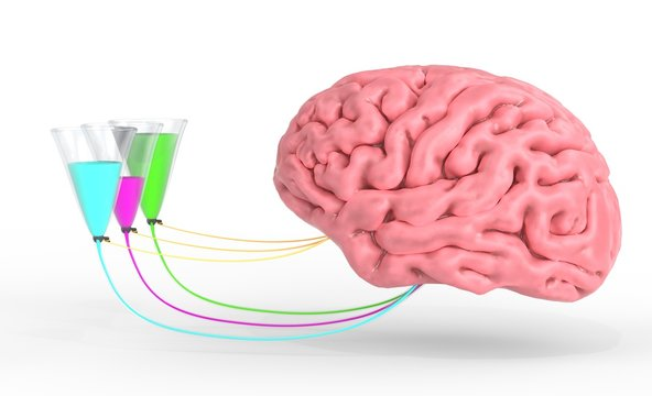 Brain control of human hormones and emotions. 3d illustration