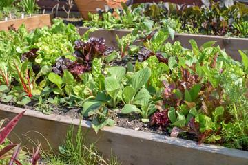 vegetable garden for kitchen use