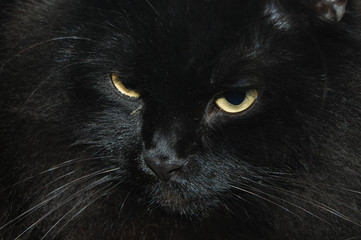 black cat with yellow eyes on a dark background