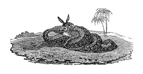 Snake engulfing its prey (from Das Heller-Magazin, May 17, 1834)