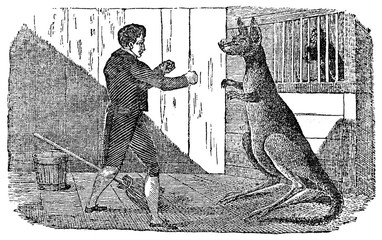 Boxing match with kangaroo (from Das Heller-Magazin, May 10, 1834)