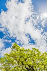 青空と雲と新緑