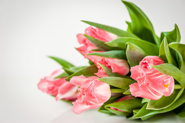 Bouquet of pink tulips on a light background. Holiday card.  Copy space. Spring concept.