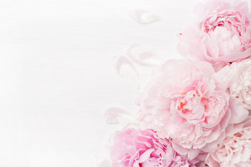 Wall Mural - beautiful pink peony flower background