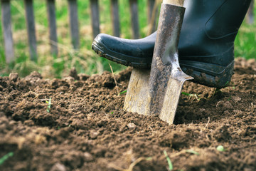 Foot wearing a rubber boot digging an earth in the garden with an old spade close up