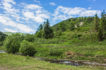 green summer valley in mountain forest environment landscape