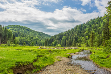 summer green mountain forest landscape with stream river