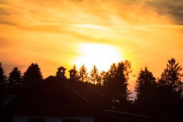 Golden sunset over trees