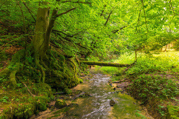a forest stream in the park, a tree covered with moss, a beautiful landscape