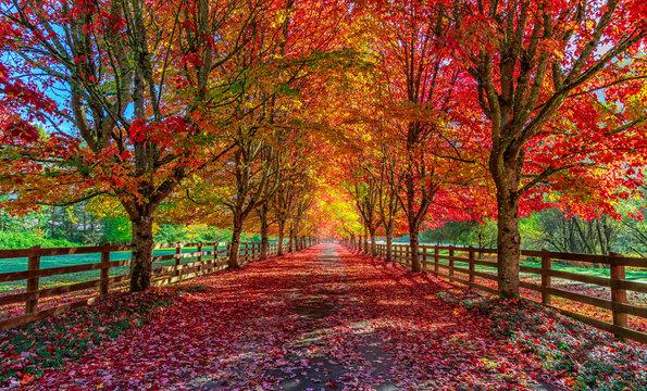 Autumn trees lining driveway