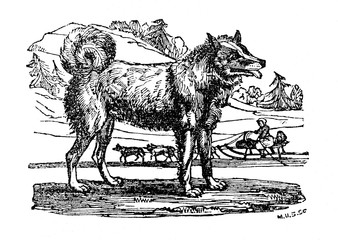 Sled-dog  (from Das Heller-Magazin, March 13, 1834)