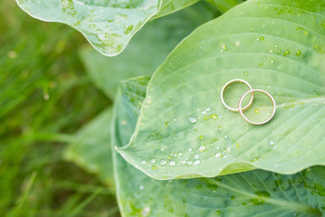 Ring of gold in a green leave. Two golden wedding rings on big leave background. Selective focus. Copy space. Wedding details concept.