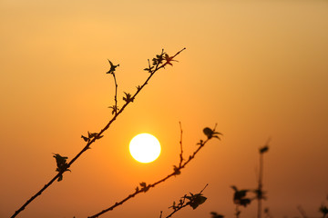 silhouette of branch of tree with the sunrise background