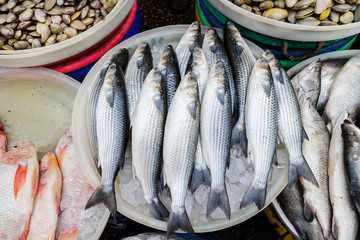 Many kind fish delicious seafood