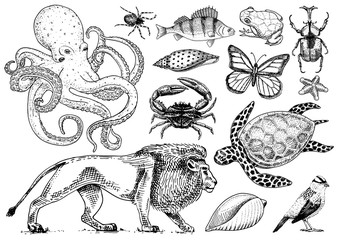 Set of animals. Reptile and amphibian, mammal and insect, wild turtle. Engraved hand drawn. Old vintage sketch. Beetle shell lion butterfly fish octopus spider. Classification of creatures and biology
