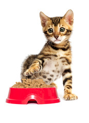 kitten and dry food at white background