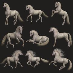Fleabitten Grey Horse, 3d CG