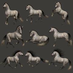 Dapple Grey Horse, 3d CG