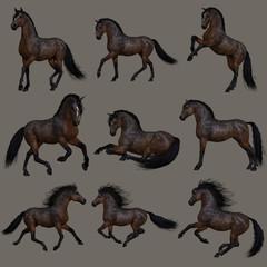 Mahogany Bay Horse, 3d CG