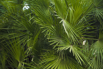 palm leaves overgrown with background