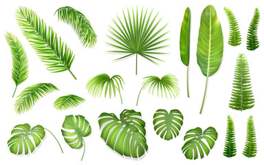 Set of tropical leaves. Vector realistic exotic plants for design invitation card or advertising vacation offer.