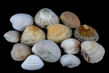 Sea Shells Isolated on a Black Background