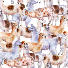 Llama and alpaca  isolated on white background. Seamless wallpaper, pattern. Watercolor. Illustration. Template. Clipart. Set