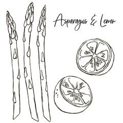 vector contour vegetable lime citrus coloring book