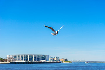 Seagull bird flies over the water against the blue sky and the stadium in Nizhny Novgorod in Russia