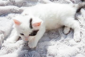 Cute little kitten on the soft grey blanket