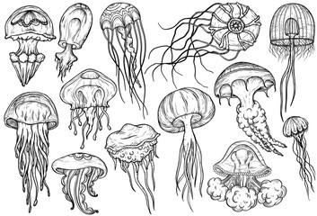 Hand drawn jellyfish set. Sea collection.
