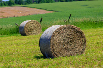 Round Hay Bales in Meadow