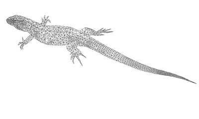 Polygonal  lizard. Geometric and triangle silhouette of a reptile on a white background. Vector illustration