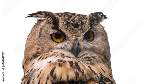 Wall mural Head of adult Eurasian eagle owl, isolated on white background. The horned owl.