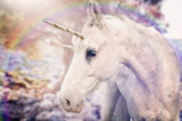 Real unicorn