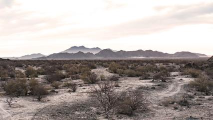 Beautiful panoramic desert setting in Baja, Mexico.