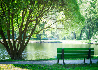 Bench in the park under a beautiful tree, summer, spring. Theme of recreation in the city