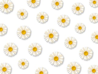 White daisy flowers. Pattern with chamomile flowers on white background. Vector illustration