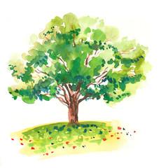 Watercolor green tree