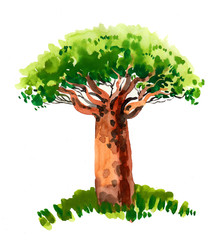 Watercolor baobab