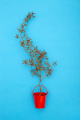 Still Life with an empty grape branch in a red bucket