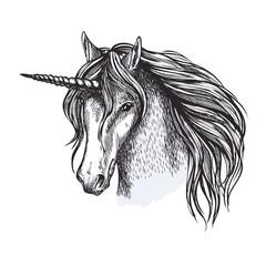 Unicorn horse fairy tale animal vector sketch