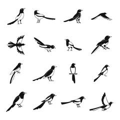 Magpie crow bird icons set. Simple illustration of 16 magpie crow bird vector icons for web