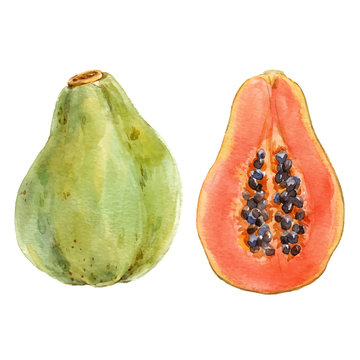 Watercolor papaya vector set