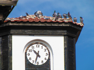 A flock of grey pigeons on the roof of the clock tower on a summer sunny day.