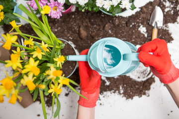 Photo of soil, watering can,, human hands in red rubber gloves watering flowers