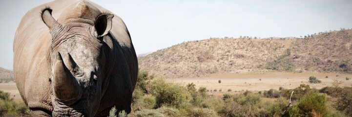 Composite image of rhinoceros standing on a dusty land