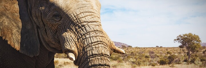 Composite image of close-up of elephant showing its tusk